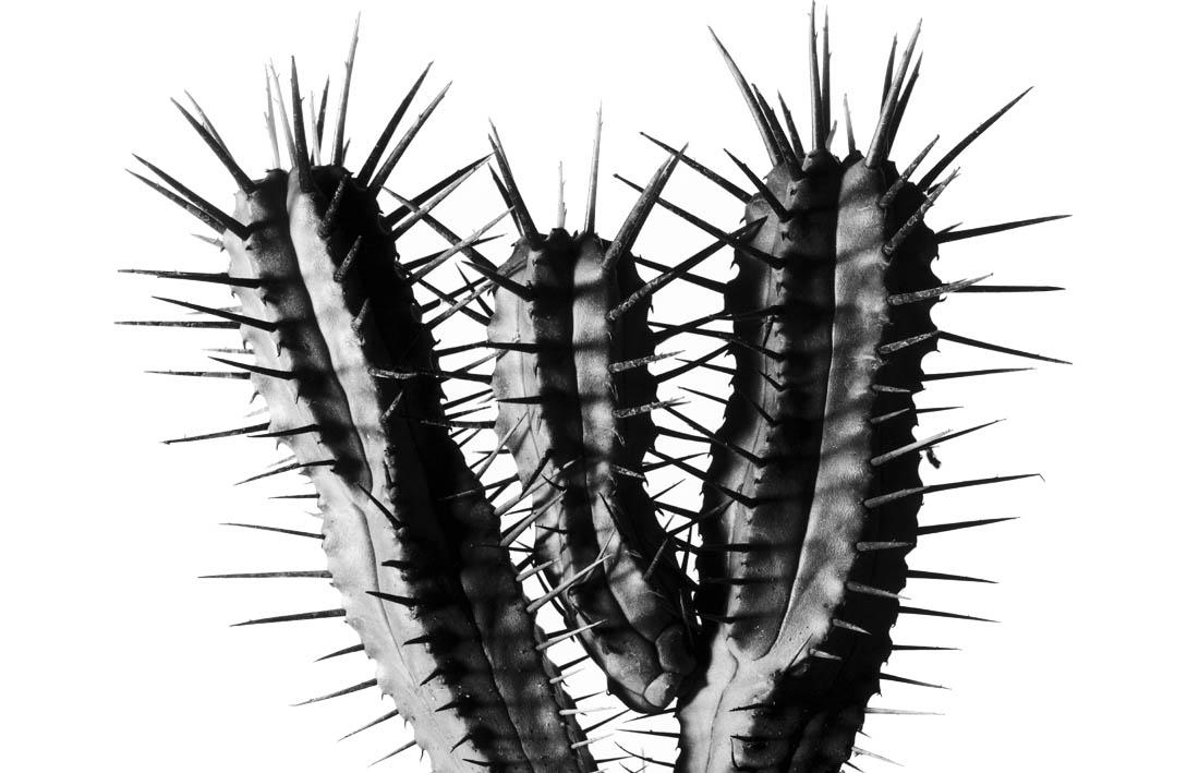 Cactus design splashback blog image
