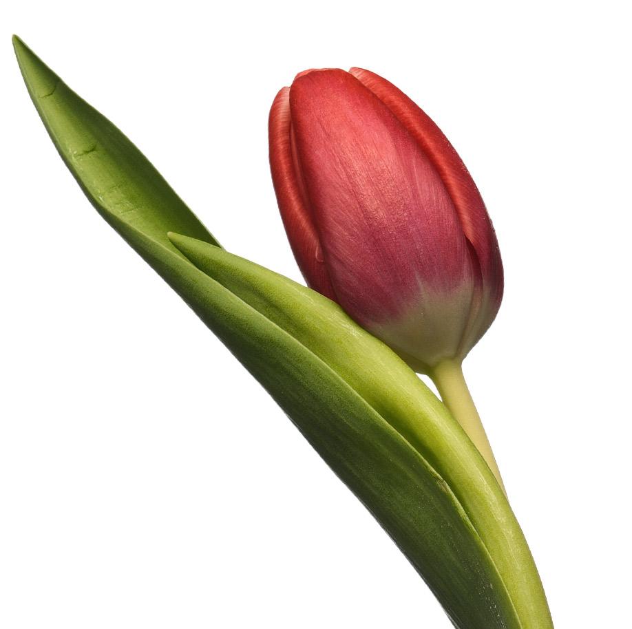 Hippe Tulips keuken achterwand