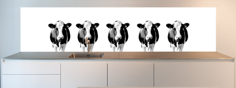 Dutch Cows on a Kitchen Splashback. Kitchen Splashbacks by SoWhat-design.com