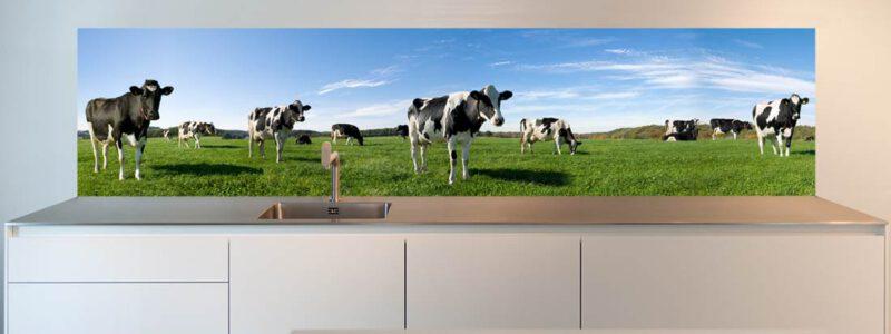 Keuken achterwand foto Koeien